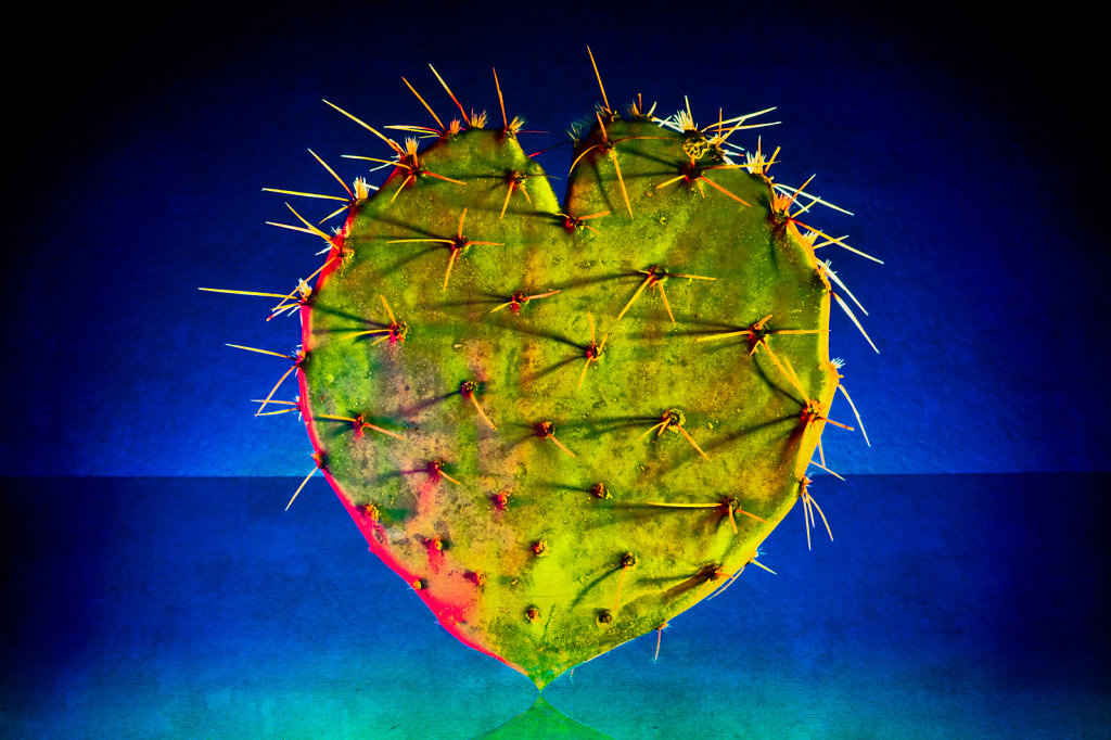 A Prickly Heart ...