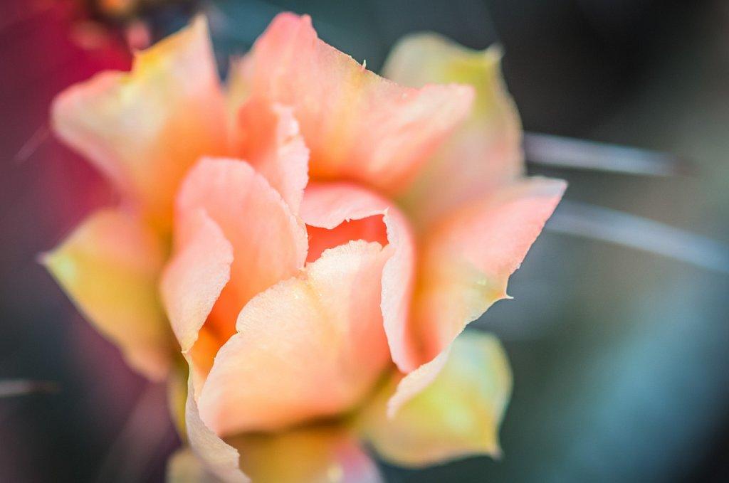 desert-flowers-0412-014.jpg
