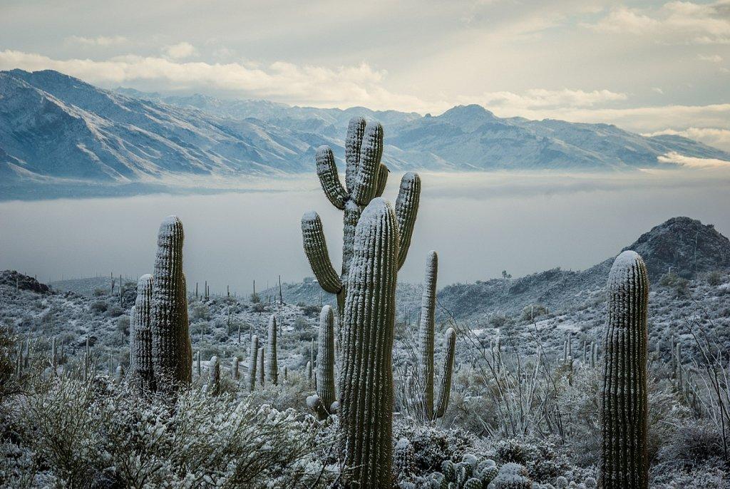 Tucson Valley in Winter