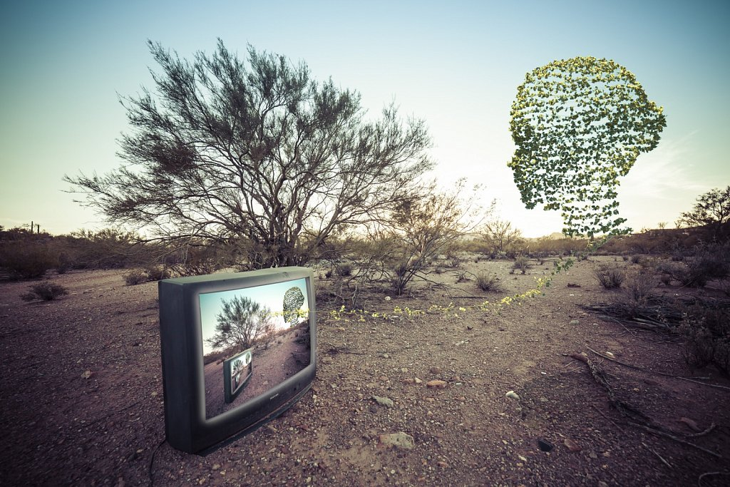 TV in the Desert